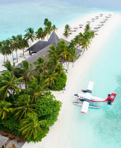 Maldive_fly